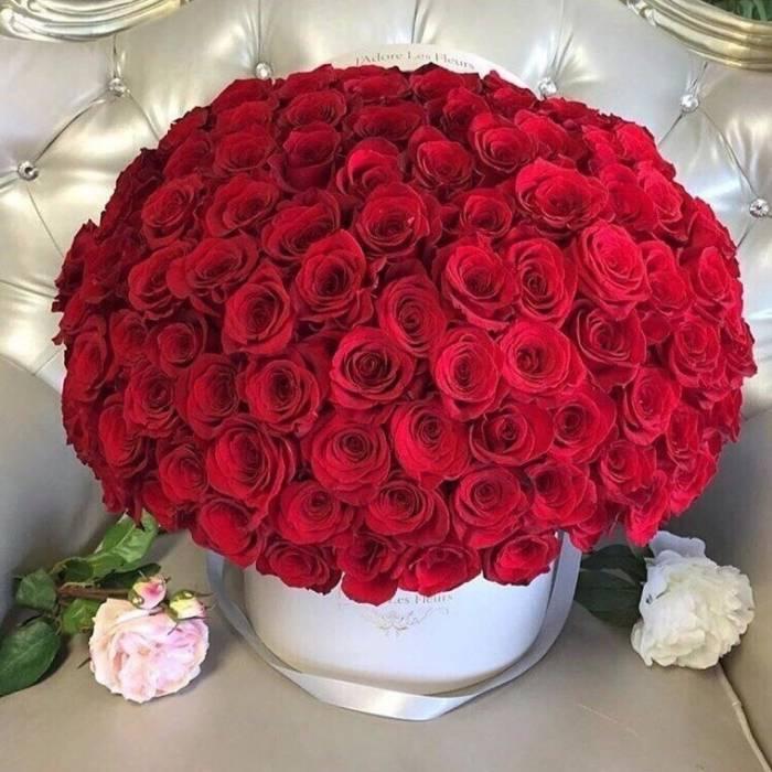 101 красная роза в коробке R030